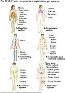 Blood flow of the heart picture 6