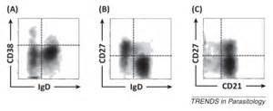 flow cytometry findings peripheral blood ebv infection picture 9