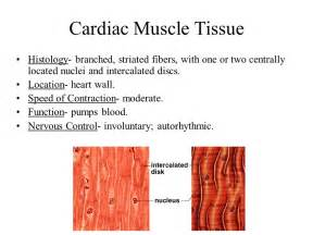 functions of smooth muscle picture 13