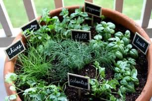 herbal garden picture 19