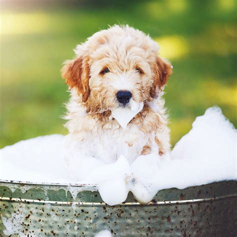 dry skin on dog picture 5