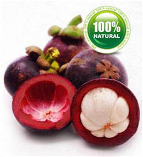 garcinia rind extract picture 9
