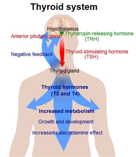 cancer research thyroid picture 9