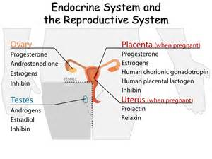 anti reproductive system picture 2