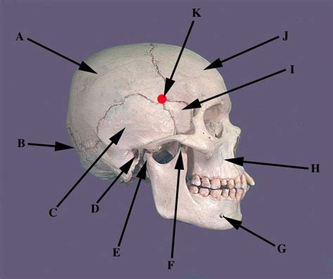 anatomy of the h picture 1