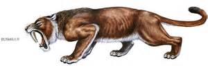 saber tooth tiger picture 18