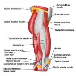 pain years after muscle byopsy in thigh picture 6