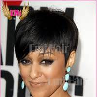 american short hair for sale picture 15
