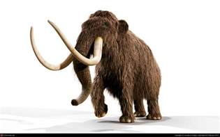 mammoth h picture 1