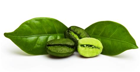 side affects of green coffee extract on thyroid picture 11
