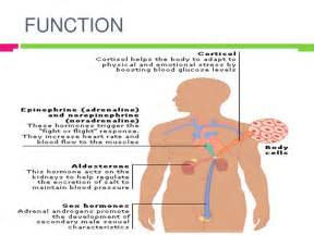 testosterone definition and function picture 7