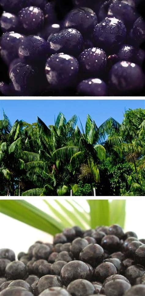 farmville acai tree picture 15