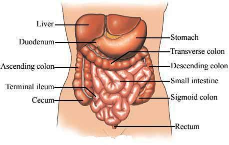 Pain in lower colon area means picture 2