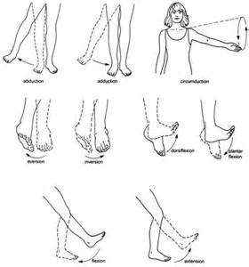 joint movements anatomy picture 6