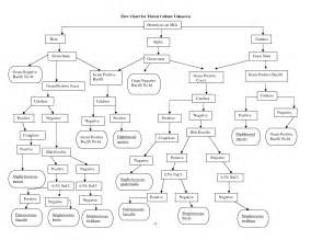 flow chart for bacterial identification picture 3