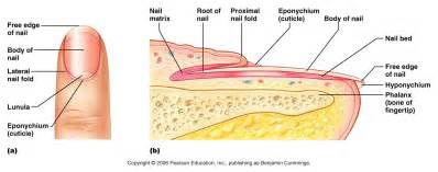 structure of skin modules picture 9