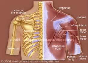 back muscle and tendon pain picture 7