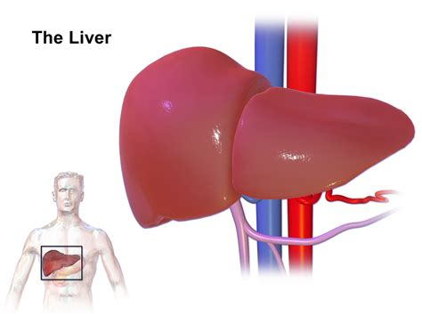 ano ang fatty liver picture 3