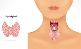 what does a small hterogeneous thyroid gland mean picture 16