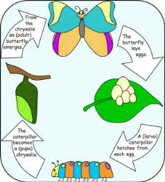 insect story in hindi picture 15
