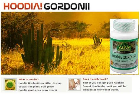 hoodia safety picture 2