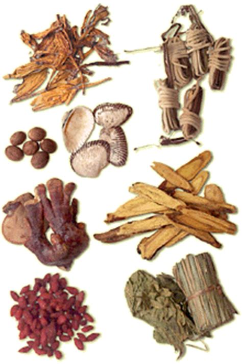 detrusor muscle toning herbs picture 3