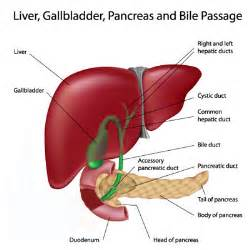 information gall bladder cancer picture 3