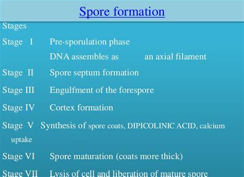 bacterial spores free spore forespore cortex spore coat picture 6