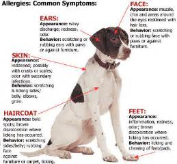 dog skin allergies picture 7