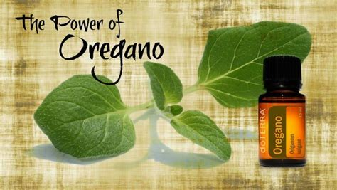 oregano oil and testicules pain picture 6