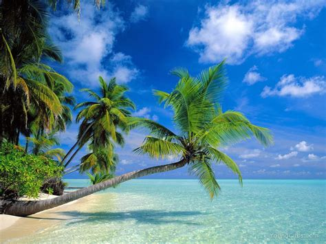 ultra green costa rica picture 2