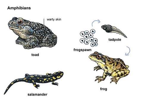 amphibians health submit url picture 6