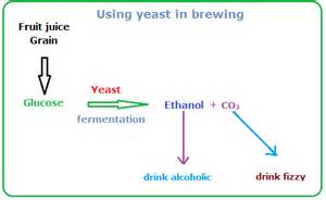 yeast in brewing picture 13