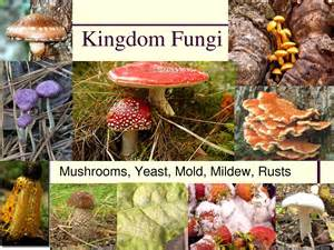 fungi kingdom picture 7