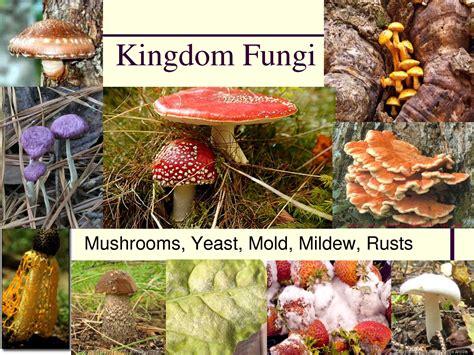 fungi kingdom picture 2
