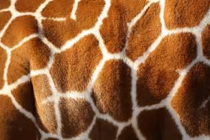 giraffe skin print stencil picture 6