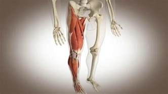 fatigue medicine muscle pain picture 17
