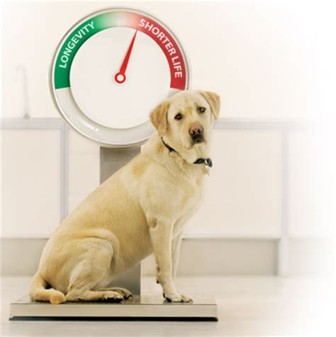 canine coughing weight loss picture 9