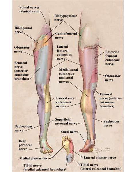 full body physical examination picture 17