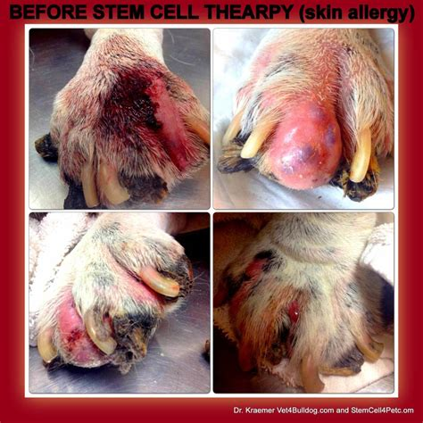 dog skin allergies picture 15