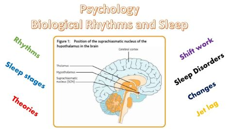 biologic sleep picture 10