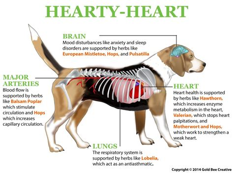 canine liver failure picture 2