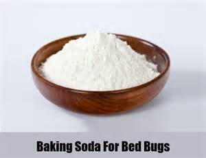 ayurvedic treatment of bed bugs picture 1