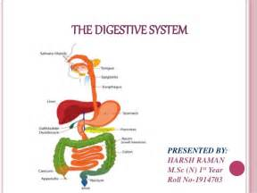 true layers of the gastrointestinal tract picture 10