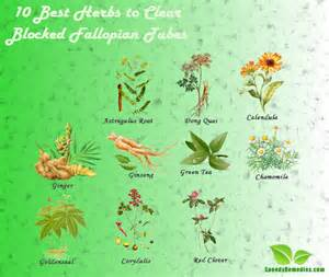herb that can cure hydrosalpinx picture 1