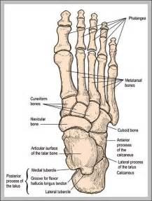 bone graph and wisdom h picture 6