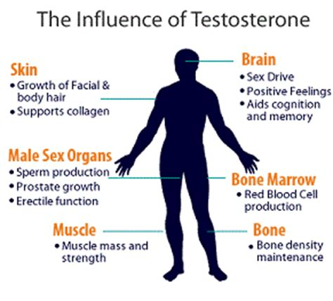 testosterone supplements benefits and risks picture 1