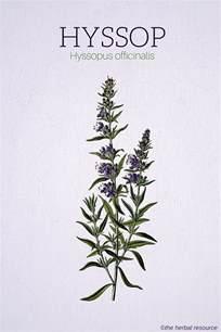 herbal diuretic picture 5