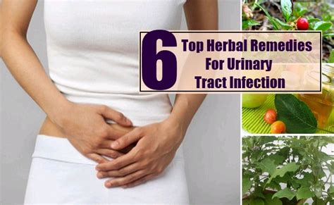 Herbal remedies for urinary tract infections picture 11