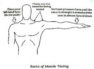 how to muscle test picture 7